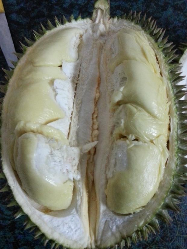 sầu riêng chuong bo